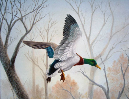 Like a Duck painting of a mallard duck by jacqui faye, original